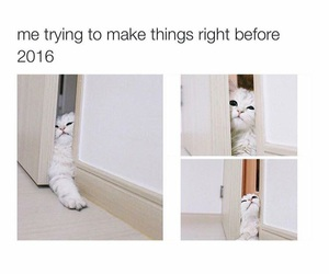 2016 and cat image
