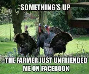 funny, lol, and thanksgiving image