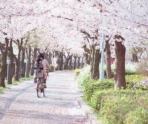japan, sakura, and nature image