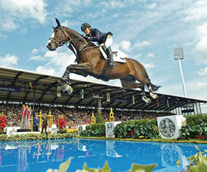 horses, jump, and professional image