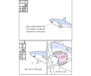 funny, lol, and shark image