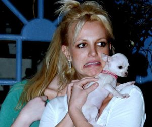 britney spears, puppy, and cute image