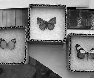butterfly, animal, and b&w image