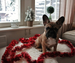 christmas, dog, and french bulldog image
