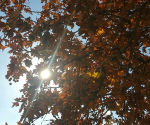 autumn, beautiful, and sunshine image
