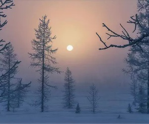 tree, snow, and beautiful image