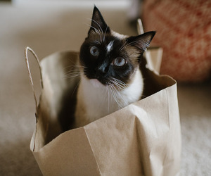 cat, bag, and kitten image