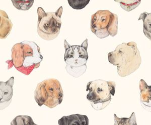 dog, cat, and wallpaper image