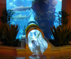 water, shark, and slide image