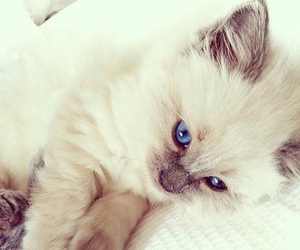 adorable, blue eyes, and cute image