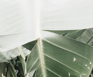 green, indie, and leaves image