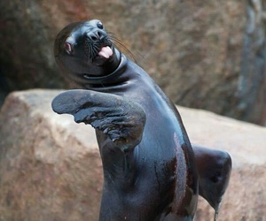 Animales, nature, and foca image
