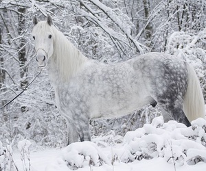 horse, snow, and white image