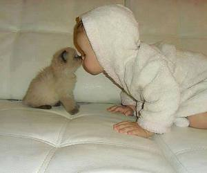 baby, cat, and dog image
