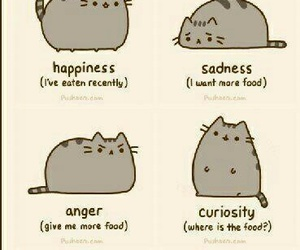 cat, emotions, and food image