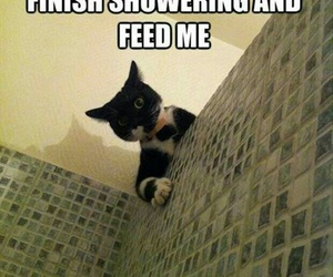 cat, funny, and shower image