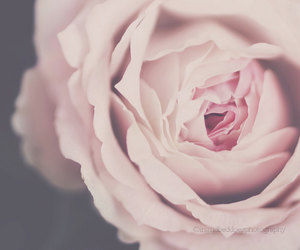 etsy, flower photography, and home decor image
