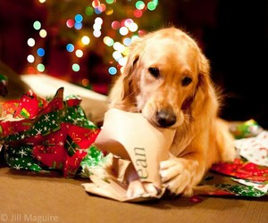 dog, christmas, and winter image