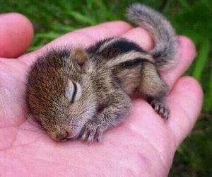 cute, animal, and squirrel image