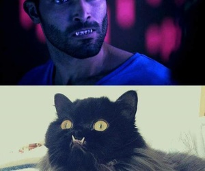 cat, teen wolf, and funny image
