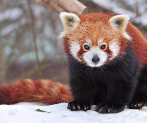 animal, panda, and photography image