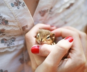 cute, animal, and nails image