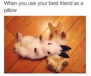 funny, bunny, and pillow image