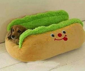 dog, cute, and hot dog image