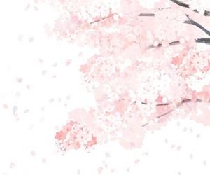 pink, sakura, and flowers image