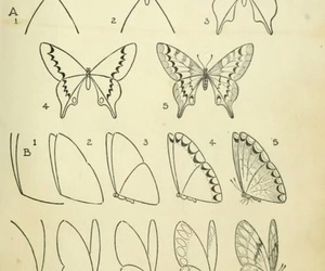 butterfly, draw, and art image