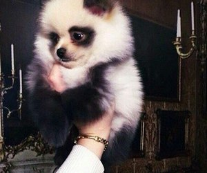 cute, dog, and panda image