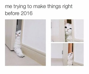cat, funny, and 2016 image