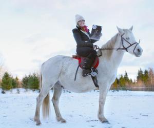 equestrian, estonia, and horse image