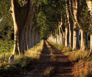 country road, dirt road, and france image