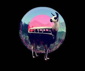 animal, bus, and cool image