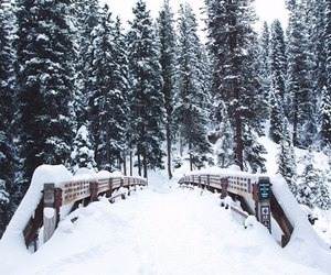 winter, nature, and snow image