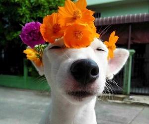 dog, fun, and Frida image