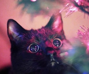 cat, christmas, and shiny image