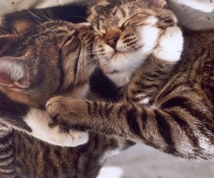 cat, animal, and love image