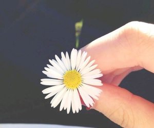'flowers', 'tumblr', and 'aesthetic' image