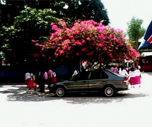 blossoms, students, and tree image