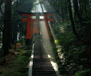 gate, japanese, and kyoto image
