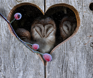 heart and owl image
