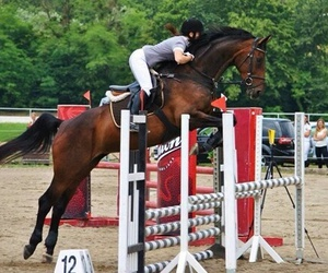 horse, jumping, and hooves image