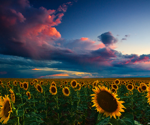beautiful, bright, and photography image