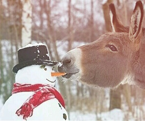 snowman, donkey, and winter image