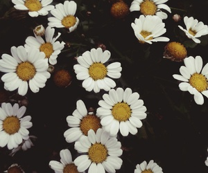 aesthetic, beauty, and daisies image