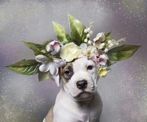 dog, pitbull, and flowers image