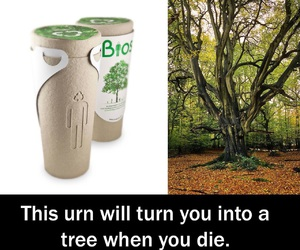 tree and urn image