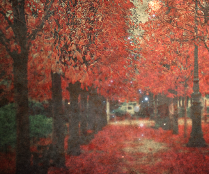 afternoon, autumn, and Dream image